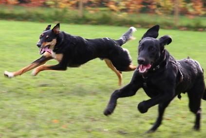 Do Dogs Like Tug Of War